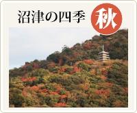 沼津の四季・秋