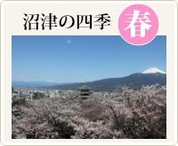 沼津の四季・春