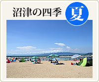 沼津の四季・夏